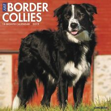 Just Border collies 2019 Wall Calendar, Border Collie by Willow Creek Press