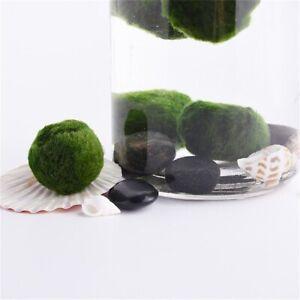 Marimo Moss Balls  Aquarium Plant Algae Fish Tank  Green Seaweed Ball