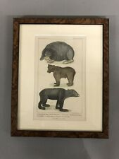 """Antique 1837 Hand Colored Engraving Of 3 Bears  G. Henderson Old Bailey 11"""" X 9"""""""