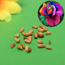 New listing 600Pcs/lot Splendid Rare Colorful Rainbow Rose Flower Seeds Yard Garden Plant