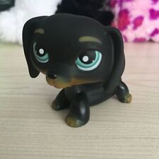 LITTLEST PET SHOP  Black Dachshund Dog Chien Teckel Puppy Blue LPS Figure#655