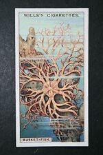 Basket Fish   Original 1920's Vintage Illustrated Card  # VGC