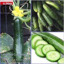 """20 Lebanese Cucumber """"Cucumis satavis"""" Seeds, Sweet tasting & burpless variety"""