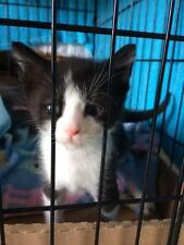 "KITTEN ""CHASE"" COLOR RESCUE PHOTO HELPS FEED PAY VETERINARY COSTS NON-PROFIT"