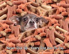 Dog Motivational Poster Art Print Chihuahua Veterinarian Gifts Collar  MVP472
