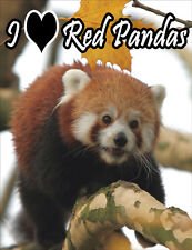 Red Panda Fridge Magnet - Wildlife