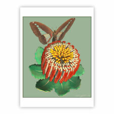 © ART  butterfly Banksia Original Insect Flower Artist illustration Print by Di