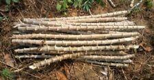Ceylon cassava sticks for planting 5 sticks , Fresh and 100% Planting capable