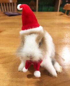 Ferret Rabbit Guinea pig Santa Hat + Scarf Christmas Costume Xmas Clothes Outfit