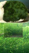 Nadelkraut + Pflanzmatte Set / Teichpflanze Pflanzen für den Teich Teichpflanzen