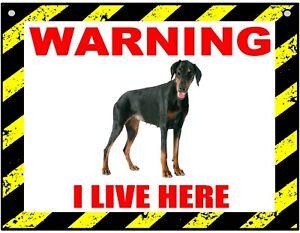 Warning I Live Here - Doberman - Dog - Metal Sign For Indoor or Outdoor