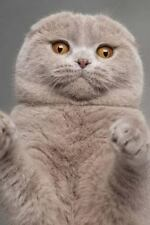 Scottish Fold Cat Journal : I Coulda Been a Contender. 150 Page Lined Noteboo.