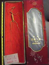 JiLin Ginseng Whole Root Ginseng in Box 80's