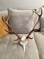 More details for scottish highland red deer antlers