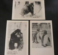 San Diego Zoo California CA Postcard Lot Penguin Gorilla M'Bongo N'Gagi Monkey 3