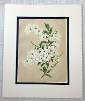 1877 Antique Botanical Print Pearl Bush White Flowers Victorian Chromolithograph