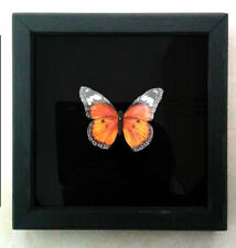 """100% Handmade & Cruelty free Framed Artificial Butterfly """"Papilio machaon"""""""