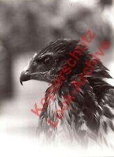 Hans Haux~Der Falke~SW-Photographie~Foto-Handabzug~ ca. 17 x 23 cm