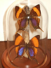 Daggerwing Butterfly Dome
