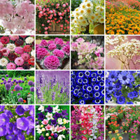 Wholesale Various Flower Seed Ideal Garden Potted Rare Flower Plant Ornamental