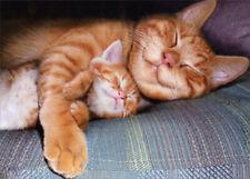 Napping Mom Cat & Kitten - Avanti Mother's Day Card by Avanti Press