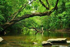 VLIES Fototapete-DSCHUNGEL-(4159V)-Bäume Natur See Wasserfall Wald Landschaft