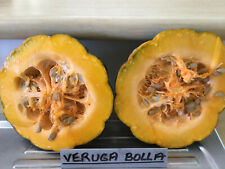 Pumpkin VERUGA BOLLA-Pumpkin Seeds-LOVES IT HOT AND HUMID, VERY TASTY-12 SEEDS.