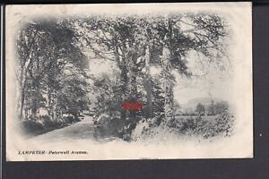 Wales - Cardiganshire Lampeter Peterwell Avenue 1904 - Postcard