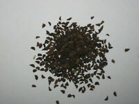 Peganum harmala - 200g Samen -, Steppenraute, Syrian rue,  Syrische Steppenraute