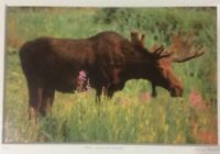 "Moose Smelling Flowers Framed  2/100 Photo Signed Willie Holdman 12 1/4""X9 3/4"""