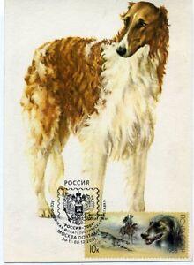 Borzoi Dog  Russian Self-made Maxicard card READ DESCRIPTION