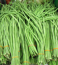 30 GREEN YARD LONG BEAN SEEDS 2019 (all non-gmo heirloom vegetable seeds!)