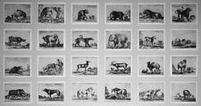 1641 Stefano della Bella: Diversi animali. The complete suite of 24 etchings.