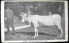 *1907 Cow ~ Jessie ~ The Cow with the Human Skin
