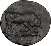 KRANNON in THESSALY 4thCenBC Thessalos Horse Bull BCD Pedigree Greek Coin i39059