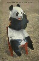 St. Louis MO Forest Park Zoo Panda Bear Linen Postcard