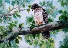 Baby Hawk ACEO watercolor print Art Card 2.5 x 3.5 by Roxanne Tobaison