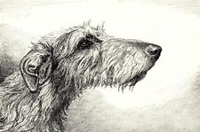 1930s Antique Deerhound Dog Print Ernest Chapman Deerhound Dog Art Print 3735 H