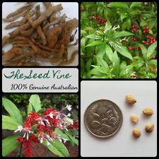 10+ INDIAN SNAKEROOT SEEDS (Rauvolfia serpentina) Sarpagandha Herb Medicinal