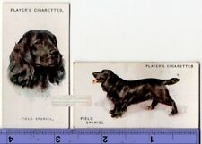 Field Spaniel Dogs 2 Different Vintage Ad Trade Cards 2nd