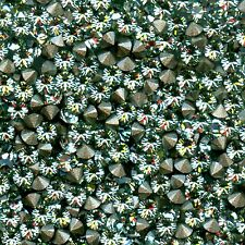 1028 PP14 CH *** 50 strass Swarovski fond conique 2mm CHRYSOLITE  F