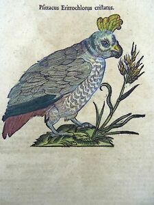 1669 Parrot Psittacus - Conrad GESNER FOLIO with 2 WOODCUTS hand colored