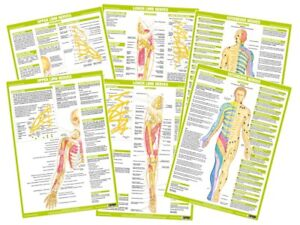 Nervous System Human Anatomy Charts Clinical Medical Posters