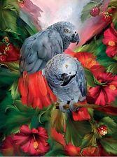 3D Lenticular Picture Parrots Tropic Spirit African Greys size 39 x 29cm