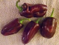 "25 + RARE CHOCOLATE BROWN SWEET PEPPER ORGANIC SEEDS -FRUITS 4-6"" LONG 2-3"" WIDE"