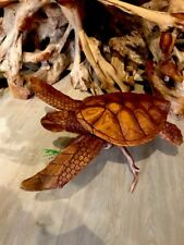 TURTLE WOOD HAND CARVED, LARGE Detailed  On Driftwwod NAUTICAL Sea Turtle