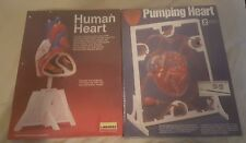 Lindberg 1/1 Life Size Human Heart Anatomy Model Kits New Health Science Project