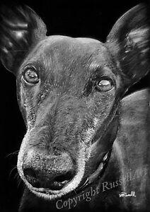 Black 3 B&W Greyhound Whippet Dog Large Art Print of original drawing RussellArt