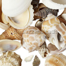 Lot of 50 Assorted Whole Shell Seashell Charms and Beads with Drilled Holes