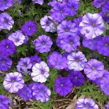 ~  Shock Wave DENIM (Blue)  *  Trailing Petunia *  20 Pelleted Seeds